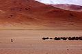 Changpa Nomad of Ladakh.jpg