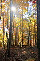Chattahoochee Nature Center - fall light through the trees.jpg