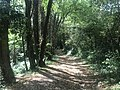 Chemin forestier dans le coteau de la Côtière à Beynost.JPG