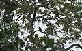 Chinnar Wildlife Sanctuary IMG 9072 (35).JPG