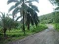 Cho Po Ro, Kra Buri District, Ranong 85110, Thailand - panoramio (12).jpg