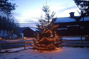 English: Christmas lights illuminate a tree an...
