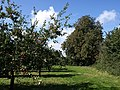 Cider orchard at Haygrass - geograph.org.uk - 959526.jpg