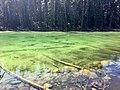 Clear green lake.jpg