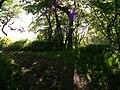 Cleghorn Glen 20 June 2010 (172).JPG