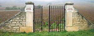 Chassagne-Montrachet wine - Clos Pitois, a Premier Cru vineyard in the southern part of Chassagne-Montrachet.