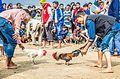 Cockfight at Jonbeel mela 2016.jpg