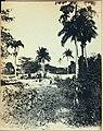 Collectie Nationaal Museum van Wereldculturen TM-60062375 Waslijnen tussen palmbomen Dominicaanse Republiek fotograaf niet bekend.jpg