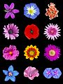 Colored flowers a.jpg
