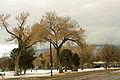Comanche Park.JPG