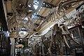 Compared Osteology Room La Plata Museum.JPG