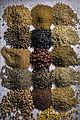 Composition de semences diverses variétés INRA-1-cliche Jean Weber (22600988045).jpg