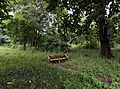 Concrete Bench - Indian Botanic Garden - Howrah 2013-10-27 3963-3964.JPG