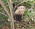Costa Rica - panoramio (7).jpg