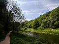 Creswell Gorge, Creswell Craggs, Notts (112).jpg