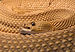 Crotalus-basiliscus-basiliskenklapperschlange.jpg