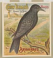 Crow brand molasses. Bryan Bro's New Orleans LCCN2003667053.jpg