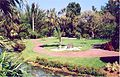 Cypress Gardens Arecaceae.jpg