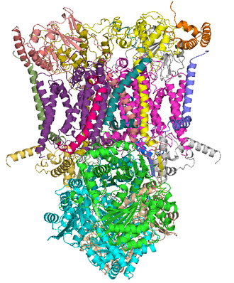 Coenzyme Q – cytochrome c reductase - Crystal structure of mitochondrial cytochrome bc1 complex bound with ubiquinone.