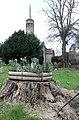 Daffodils on a tree stump - geograph.org.uk - 737035.jpg