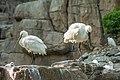 Dalian Liaoning China Singing-Birds-Woods-05.jpg