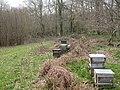 Damerham, beehives - geograph.org.uk - 1779930.jpg