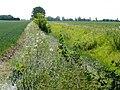 Dawsmere Creek - geograph.org.uk - 1398112.jpg