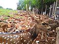 Deer hill.jpg