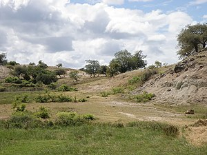 Degraded clay hills 2 km west of Secal, Baucau, 26 Jul 2010 (La Nina year).jpg