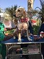 Delhi Pet Fed 2015 Image4.jpg