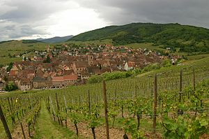 Descending into Riquewihr through vineyards.jpg