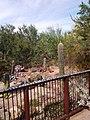 Desert Botanical Garden - panoramio.jpg