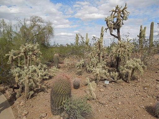 Desert Botanical Garden - Phoenix - Virtual Tour