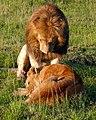 Devoted Partner ! (3525425151).jpg