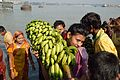 Devotee with Banana Bunch - Chhath Puja Ceremony - Baja Kadamtala Ghat - Kolkata 2013-11-09 4266.JPG
