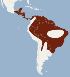 Distribution of Chrotopterus auritus.png