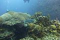 Diving Ko Tao, Thailand 1517.jpg