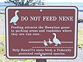 Do not feed Nene.jpg