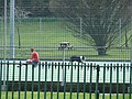 Dog stops play - geograph.org.uk - 763781.jpg