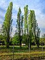Dojran Lake 217.jpg