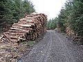 Don't climb on timber stacks^ - geograph.org.uk - 1542304.jpg