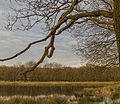 Doorkijkje. Locatie, natuurgebied Delleboersterheide – Catspoele.jpg