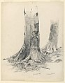 Drawing, Tree Trunks, Darmstadt, June 27, 1867 (CH 18396261).jpg