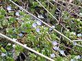 Dscn0179 japan nature.jpg