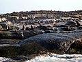 Duiker Island (16775712855).jpg