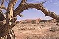 Dunst Namibia Oct 2002 slide136 - Umrahmung.jpg