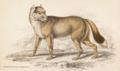 Dusicyon antarcticus - Smith - Iconographia Zoologica.png