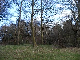 Wakefield Castle - Grass covered earthwork and tree covered motte at Lowe Hill