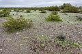 East side of the Plomosa Mountains - Flickr - aspidoscelis.jpg