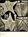 Echinodermes (astéries, ophiures et échinides) (1912) (20951995649).jpg